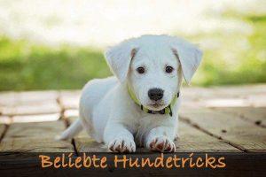Beliebte Hundetricks